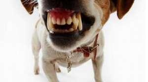 狗狗的眼睛是红色的,正常吗